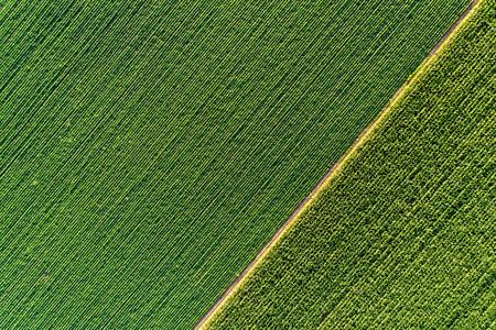 이른 여름에 필드에 다른 작물에서 대각선의 녹색 추상적 인 이미지, 지상 직접 무인도에서 촬영