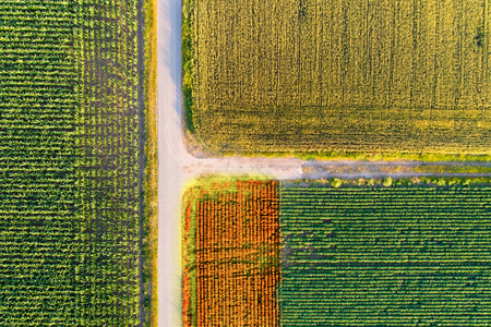Abstract image of agricultural fields shoot from drone with markers on crops
