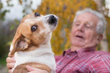 Cute dog cuddling on old mans lap in park in autumn. Pet love and care concept. Alternative therapy Imagens