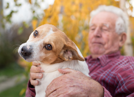 Cute dog cuddling on old man's lap in park in autumn. Pet love and care concept. Alternative therapy