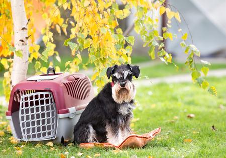 귀여운 강아지는 공원에서 잔디에 플라스틱 캐리어 옆에 베개에 앉아 스톡 콘텐츠