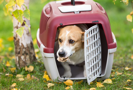Cute dog looking out from plastic carrier on grass in park with paper in mouth Reklamní fotografie