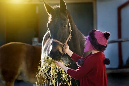 Fille au bonnet rose nourrissant un cheval noir avec du foin Banque d'images