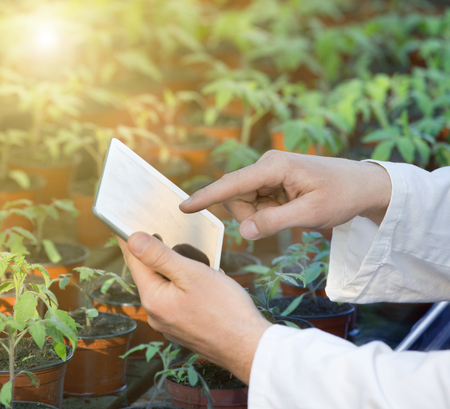 Biologist in white coat holding tablet in front of sprouts in pots in greenhouse. Plant protection concept Stock Photo