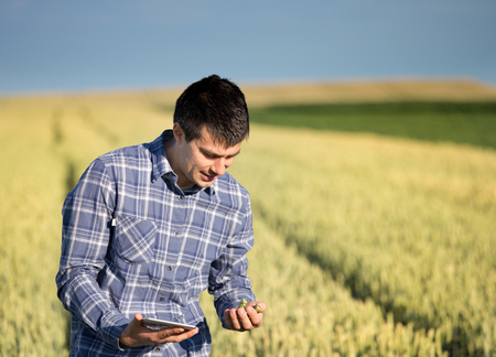 Young handsome agriculture engineer squatting in green wheat field with tablet in hands in early summer