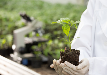 Close up of seedling in agronomists hands with gloves and white coat in greenhouse with microscope in background. Plant protection and productivity improvement concept