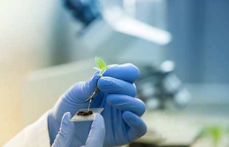Close up of biologist's hand with protective gloves holding young plant with root above microscope glass with soil. Biotechnology, plant care and protection concept