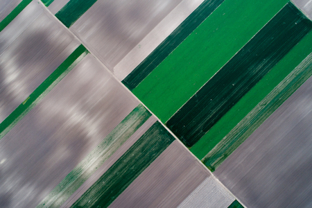 Abstract geometric shapes of agricultural parcels of different crops. Aerial view shoot from drone directly above field