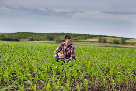 Young handsome farmer with tablet squatting in corn field in spring. Agribusiness and innovation concept Archivio Fotografico