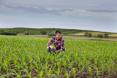 Jonge knappe boer met tablet gehurkt in maïsveld in het voorjaar. Agribusiness en innovatieconcept Stockfoto