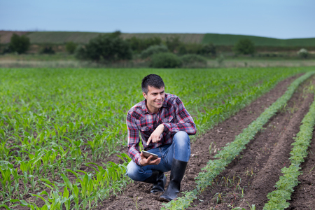 Young handsome farmer with tablet squatting between soybean and corn field in spring. Agribusiness and innovation concept