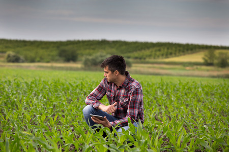 Young handsome farmer with tablet squatting in corn field in spring. Agribusiness and innovation concept Foto de archivo