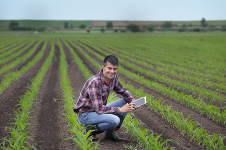Young handsome farmer with tablet squatting in corn field in spring. Agribusiness and innovation concept Standard-Bild