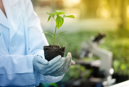 Close up of seedling in agronomist's hands with gloves and white coat in greenhouse with microscope in background. Plant protection and productivity improvement concept Stok Fotoğraf