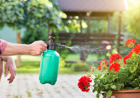 Close up of males hand holding pressurized bottle and watering flowers in garden Stock Photo