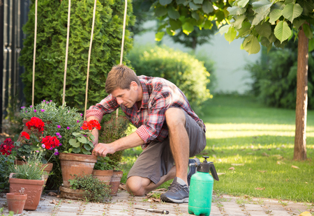 Gardener taking care of plants in flower pots in garden. Man uproot weed from ground Stock Photo