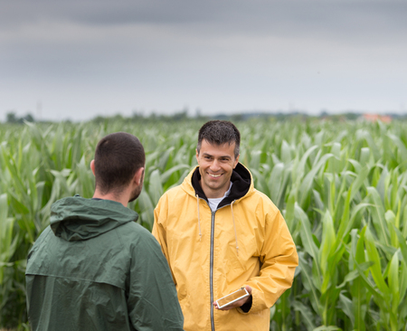 Two farmers with tablet standing in corn field and talking