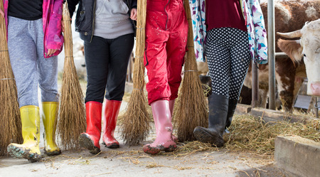 Group of female farm workers in gumboots with brooms standing in front of cows in stable
