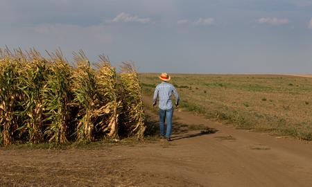 Handsome farmer with straw hat walking beside corn field in summer time Stok Fotoğraf - 107000744