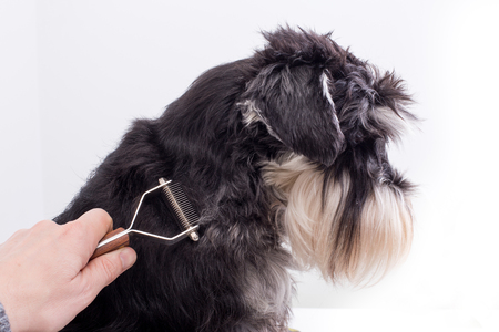Man's hand trimming dog hair against white background
