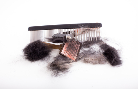 Top view of grooming equipment and dog's fur on white background