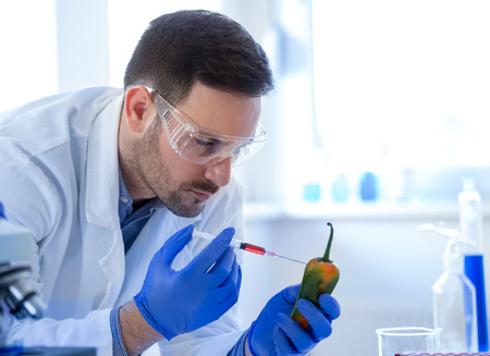 Young scientist doing research on pepper in laboratory