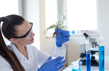 Woman biologist with protective gloves holding young plant with root above microscope glass in laboratory. Biotechnology, plant care and protection concept