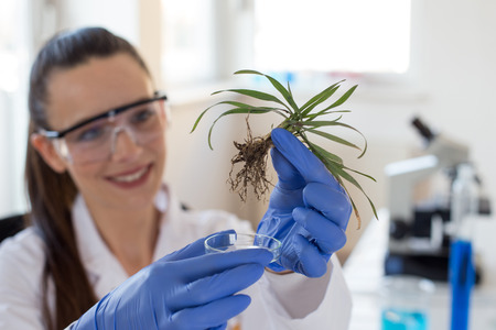 Close up of biologist's hand with protective gloves holding young plant with root above microscope glass in laboratory. Biotechnology, plant care and protection concept Banco de Imagens