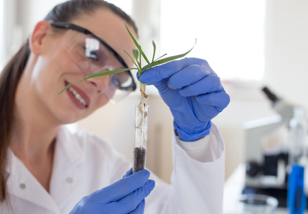 Close up of biologist's hand with protective gloves holding young plant with root above test tub in laboratory. Biotechnology, plant care and protection concept Banco de Imagens