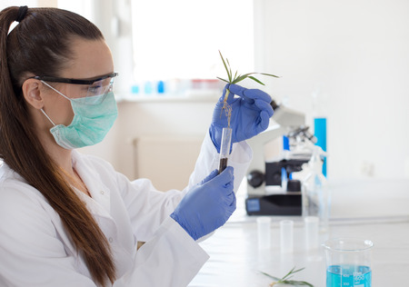 Biologist with mask and protective gloves holding young plant with root above test tube in laboratory. Biotechnology, plant care and protection concept Banco de Imagens