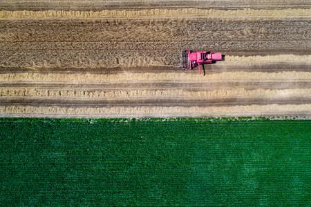 Top view of combine harvester working in wheat field in summer shoot from drone