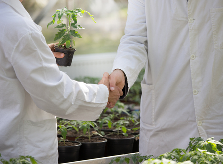 Two agronomists in white coat shaking hand while holding flower pot with fresh plant