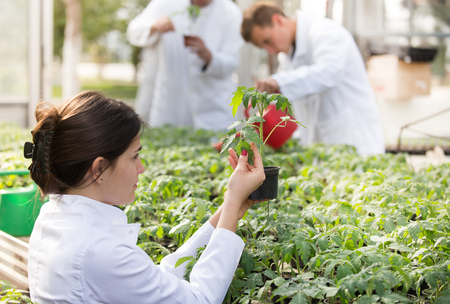 Woman agronomist holding flower pot with seedling in greenhouse with agronomists watering sprouts in background Stock Photo