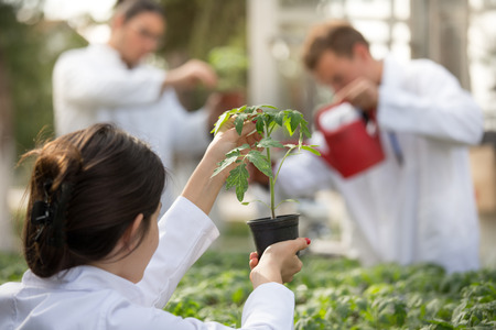 Woman agronomist holding flower pot with seedling in greenhouse with agronomists watering sprouts in background