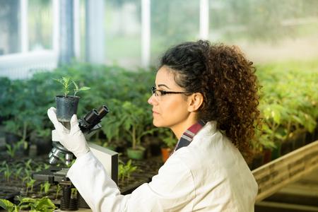 Biologe der jungen Frau, der Blumentopf mit Sprössling hält und das Wachstum neben Mikroskop im Gewächshaus überprüft. Pflanzenschutzkonzept