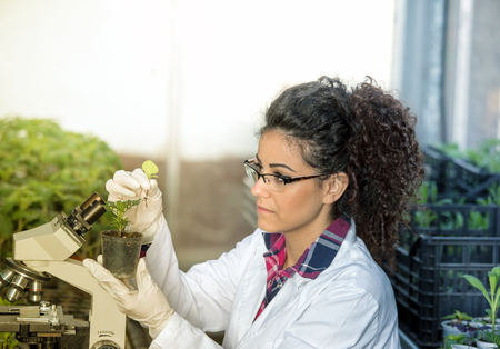 Young woman biologist holding flower pot with sprout and checking it growth beside microscope in green house. Plant protection concept Stock Photo
