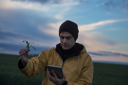 Farmer in raincoat holding corn sprout and looking at tablet in field