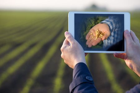 Close up of farmers hands holding tablet in front of soybean field in spring