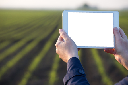 Close up of farmers hands holding tablet in front of corn field in spring Stock Photo