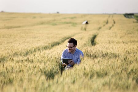 Satisfied young agronomist squatting in barley field and looking at tablet