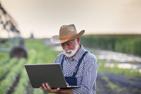 Senior farmer looking at laptop with irrigation system in soybean field in background Stockfoto