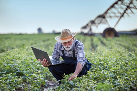 Senior farmer with laptop squatting in soybean field  with irrigation system in  background