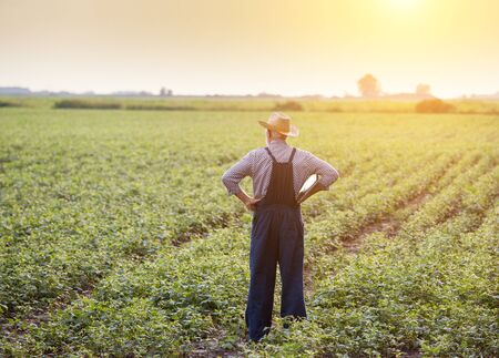 Rear view of senior farmer in overalls and with straw hat standing in soybean field at sunset