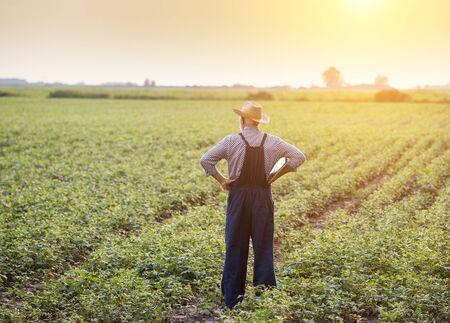 Vista trasera del agricultor senior en monos y con sombrero de paja de pie en el campo de soja al atardecer