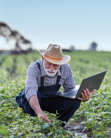 Mature farmer with laptop squatting in field and checking plants. Irrigation system in background