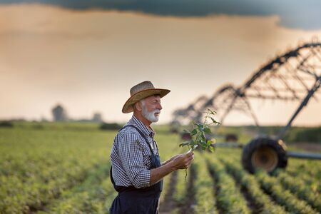 Mature farmer with straw hat examining plants in field in front of irrigation system