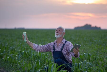 Senior farmer with tablet squatting beside rain gauge in corn field and looking at sky Stock Photo