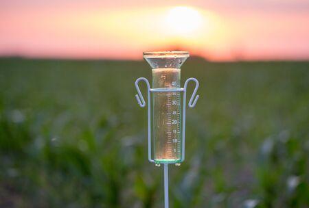 Pluviómetro para medición de agua de pie en el campo de maíz al atardecer