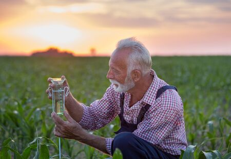 Senior farmer squatting beside rain gauge in corn field at sunset Stock Photo