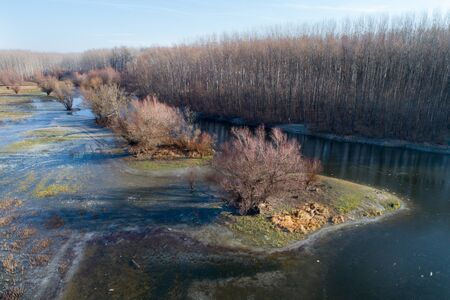 Aerial image of winter landscape of river and trees in Koviljski rit in Serbia, shoot from drone